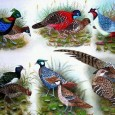 With over 875 species (almost 8% of the world total) of birds, Nepal is a paradise for bird and among them almost 5 hundred species are found in the Kathmandu […]